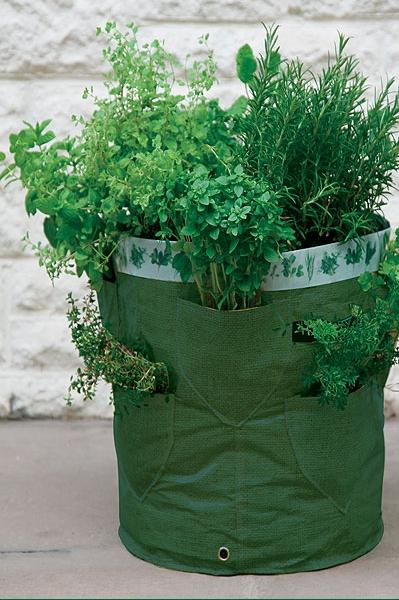 Pflanzset mit 3 verschiedenen Kräutersamen zum Anpflanzen und Kräuterkiste