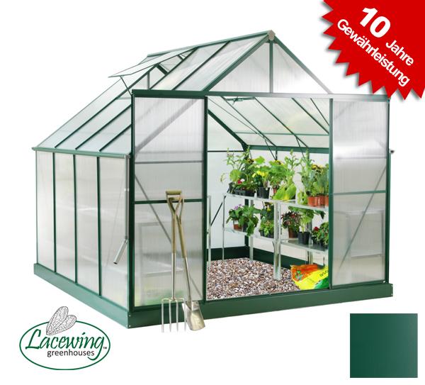 lacewing luxus 6 8m gew chshaus mit doppelt r gr n 459 99. Black Bedroom Furniture Sets. Home Design Ideas