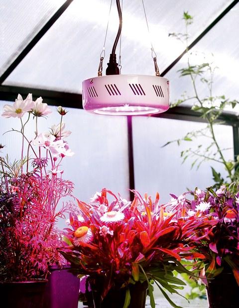 superwachstums led 1 pflanzen lampe 249 99. Black Bedroom Furniture Sets. Home Design Ideas